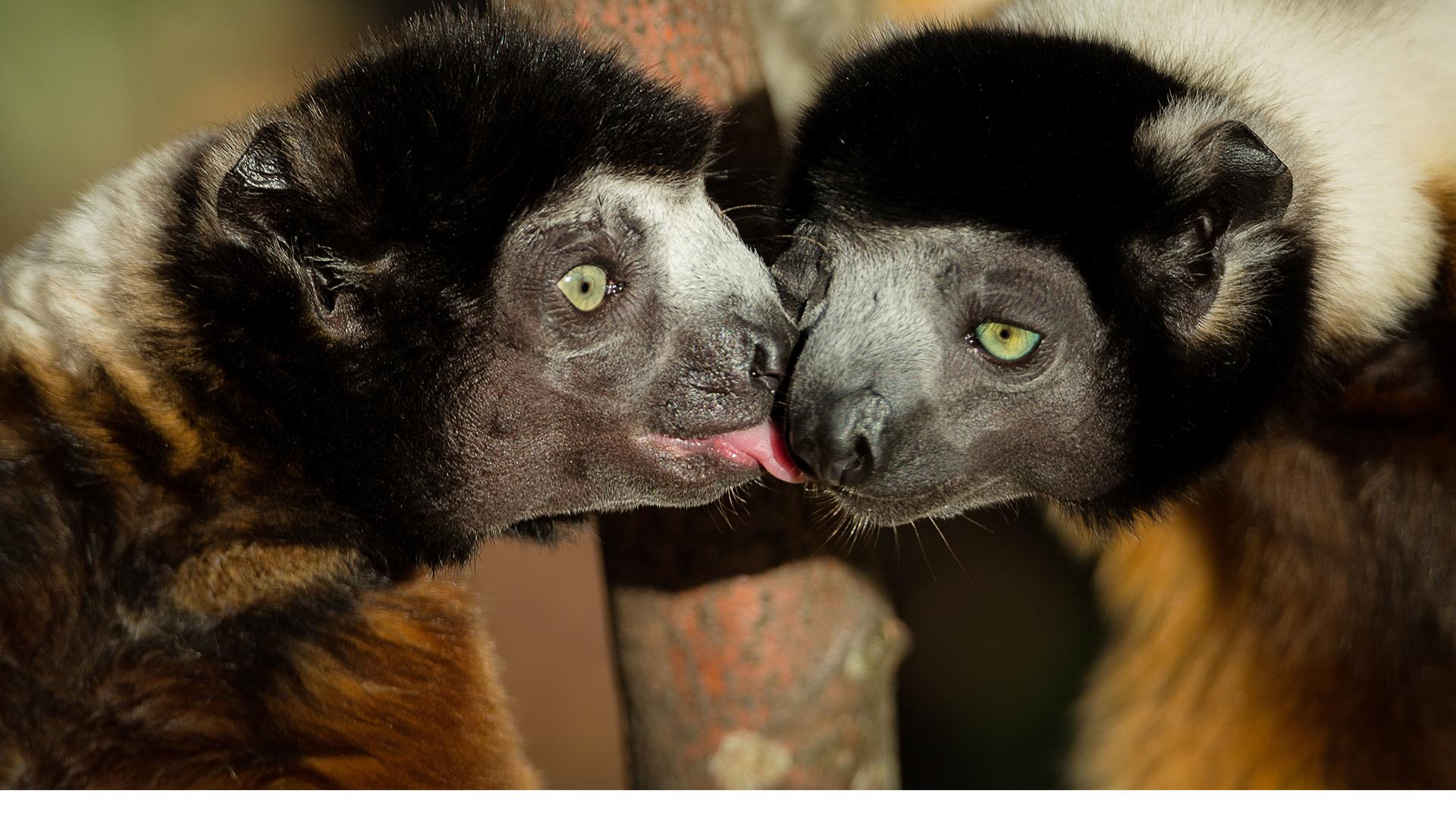 Protection des espèces | Zoo Mulhouse, zoologischer und botanischer Garten