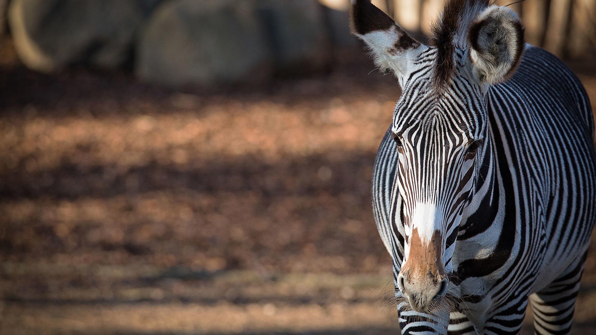 Protection des espèces | Zoo de Mulhouse, parc zoologique et botanique