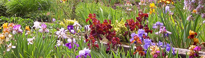 450 variétés de rhododendrons