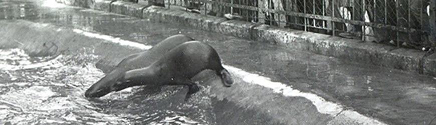 1893 : La Ville reprend le zoo