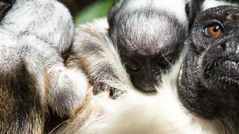 La petite Amazonie | Zoo de Mulhouse, parc zoologique et botanique