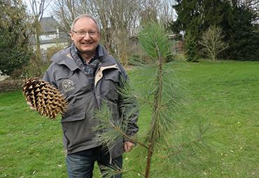 Emile-Jean Wybrecht présente un cône de pin de Coulter.