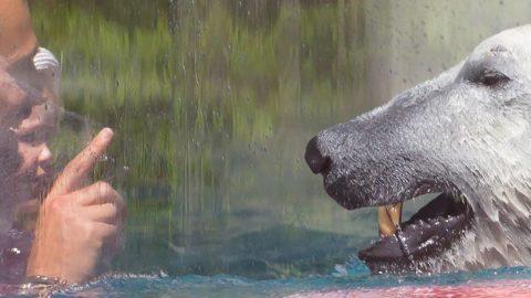 Vidéo : Le zoo dans l'émission Midi en France de France 3 | Zoo de Mulhouse, parc zoologique et botanique