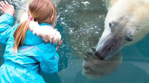 En savoir plus sur '1er colloque francophone sur les ours polaires'