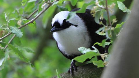 Le zoo se mobilise pour les oiseaux d'Asie | Zoo de Mulhouse, parc zoologique et botanique