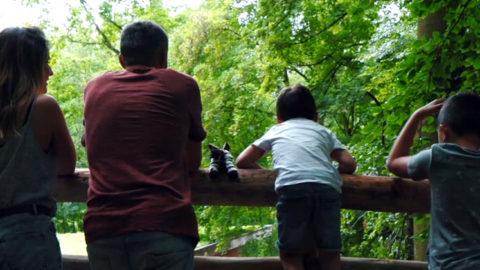 Nouvelle vidéo #DestinationMulhouse | Zoo de Mulhouse, parc zoologique et botanique