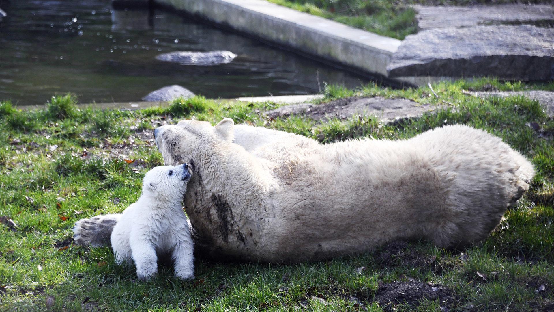 Découvrir l'ourson Kara | Zoo de Mulhouse, parc zoologique et botanique