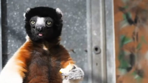 [Vidéo] Le bien-être animal, une priorité du Parc | Zoo de Mulhouse, parc zoologique et botanique