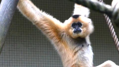 [Vidéo] La conservation ex-situ | Zoo de Mulhouse, parc zoologique et botanique